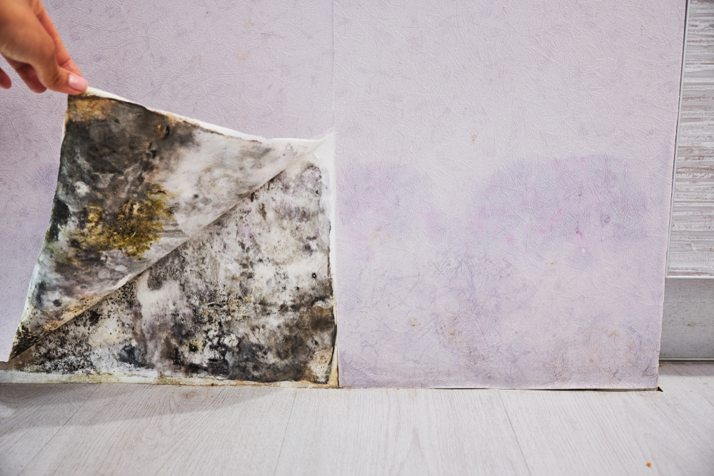 Can Mold Inside Walls Make You Sick?
