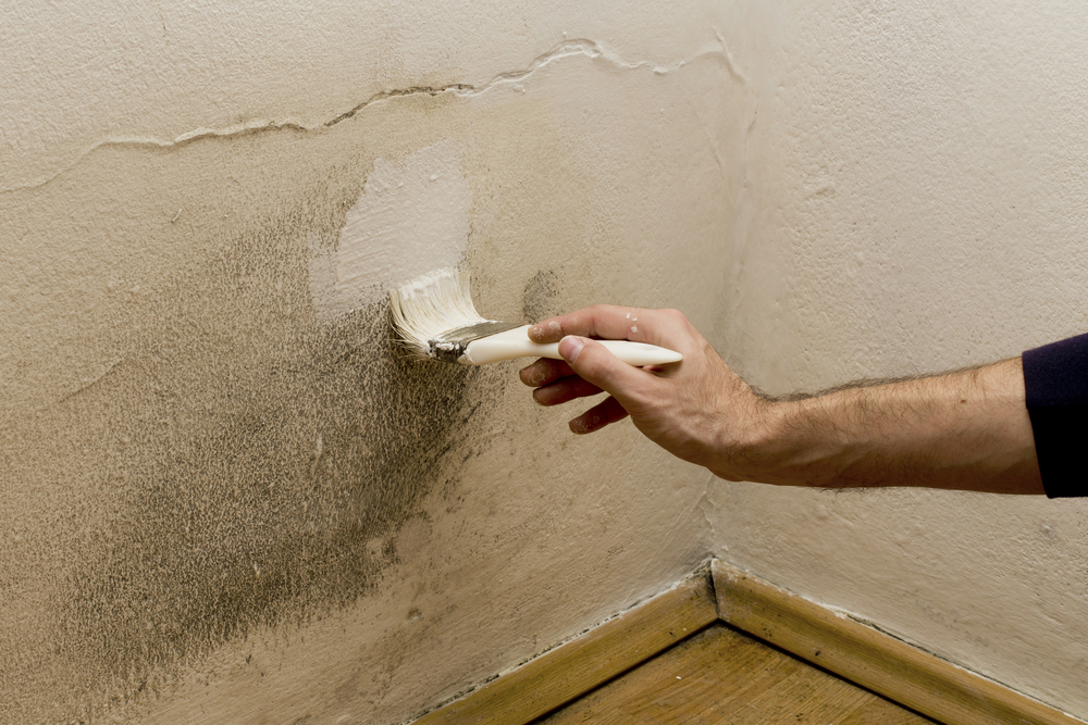 Can you paint Drylok over mold
