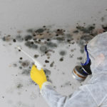 Do You Need Certification To Remove Mold?