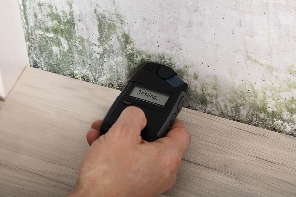 How Can I Test My Home For Mold