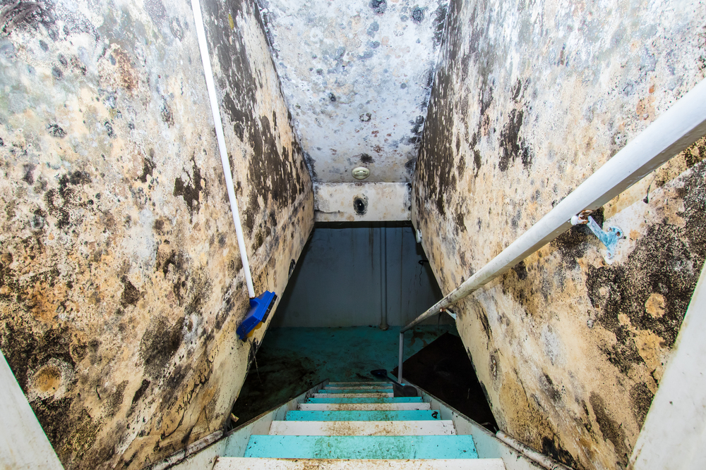 How Do You Get Rid of Mold in the Basement