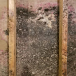 How Fast Does Drywall Mold?