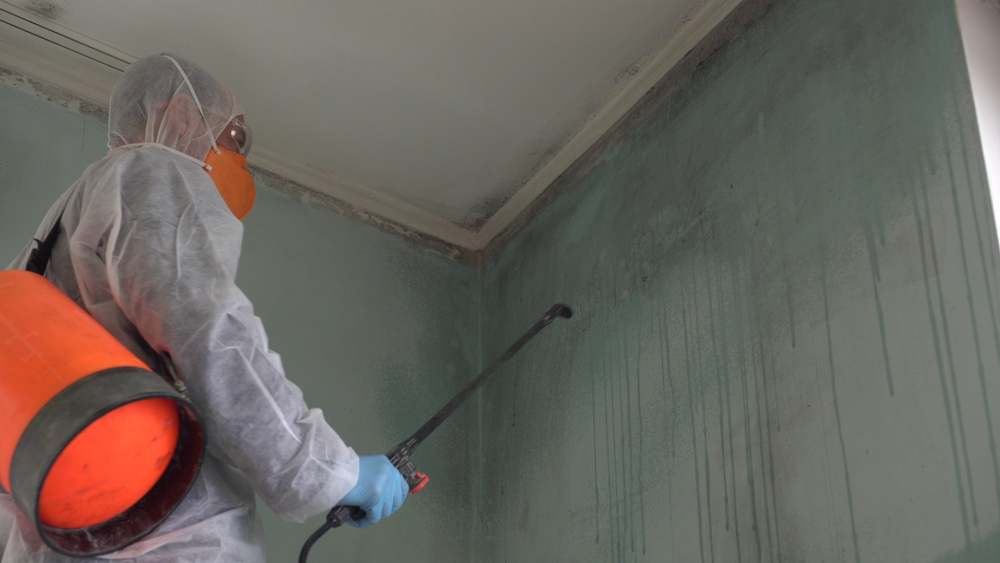 How Long Does It Take for Mold Remediation