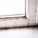 How Long Does Mold Stay in the Air?