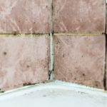 How Do You Get Black Mold Out of Shower?