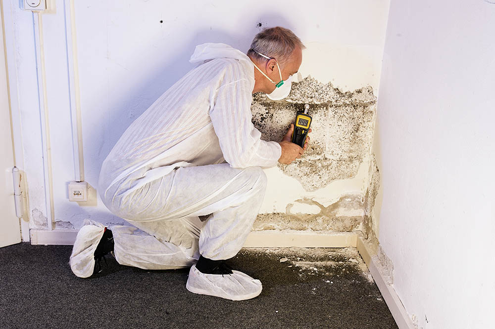 How much does it cost to get your house checked for mold