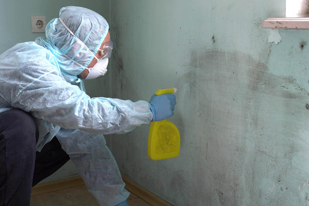 Is mold remediation covered under homeowners insurance
