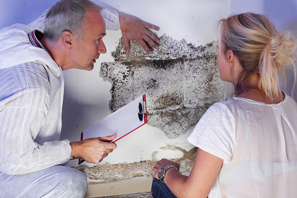 Can You Refuse to Pay Rent If You Have Mold