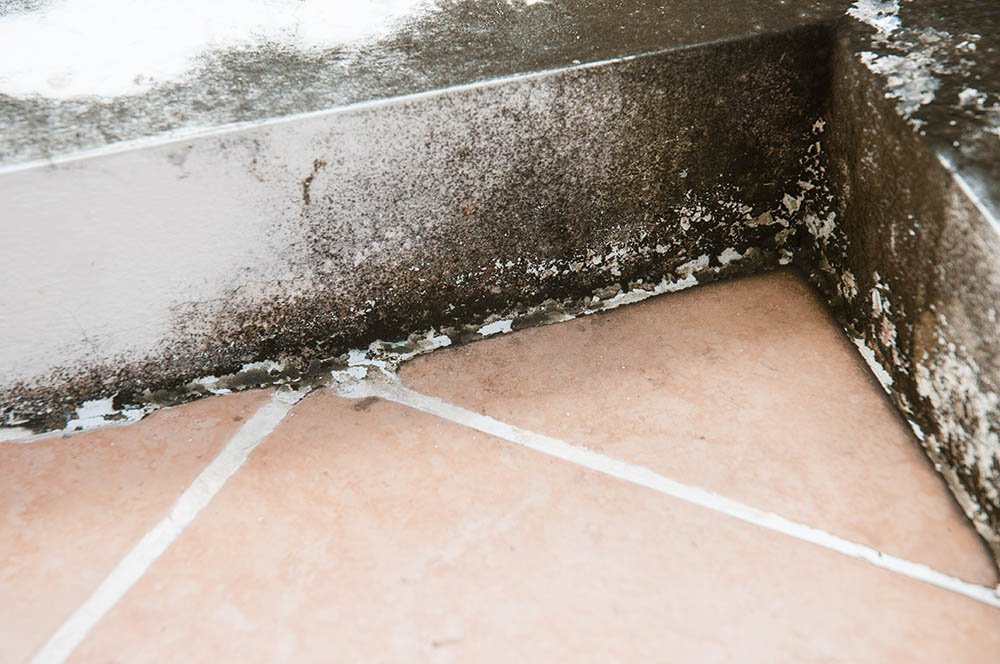 What does mold look like in the basement