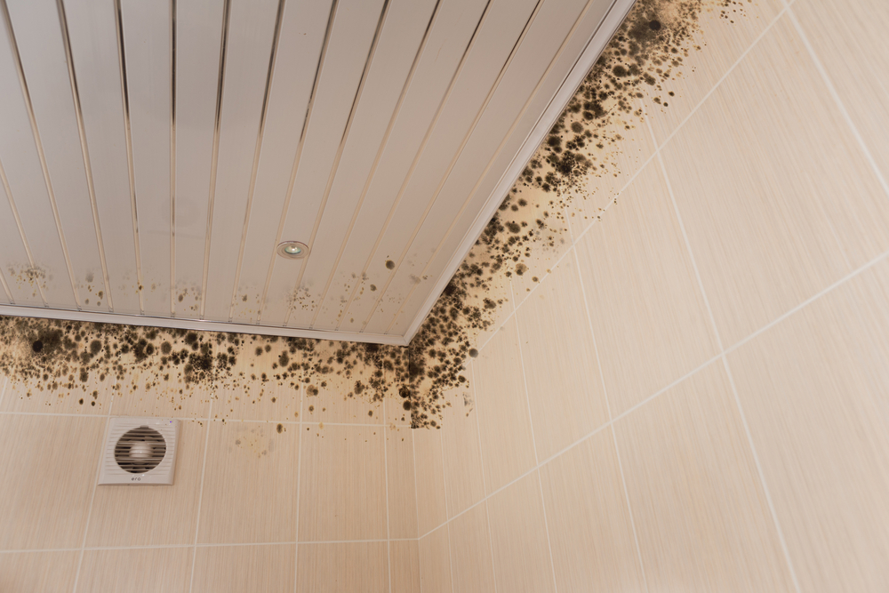 What does toxic mold look like?