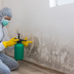 What Is The Process For Mold Remediation?
