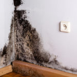 What's The Difference Between Black Mold and Regular Mold?