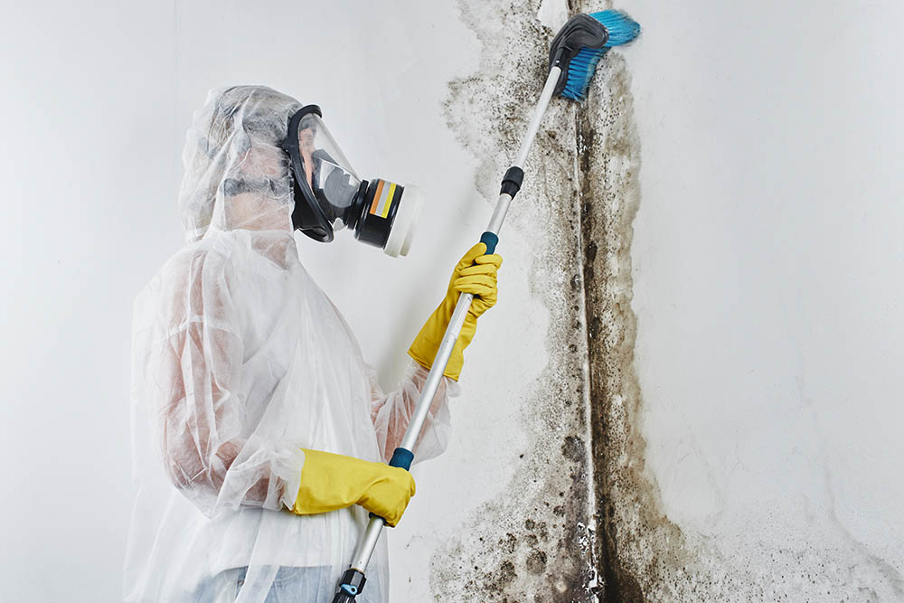 Do you need certification to remove mold
