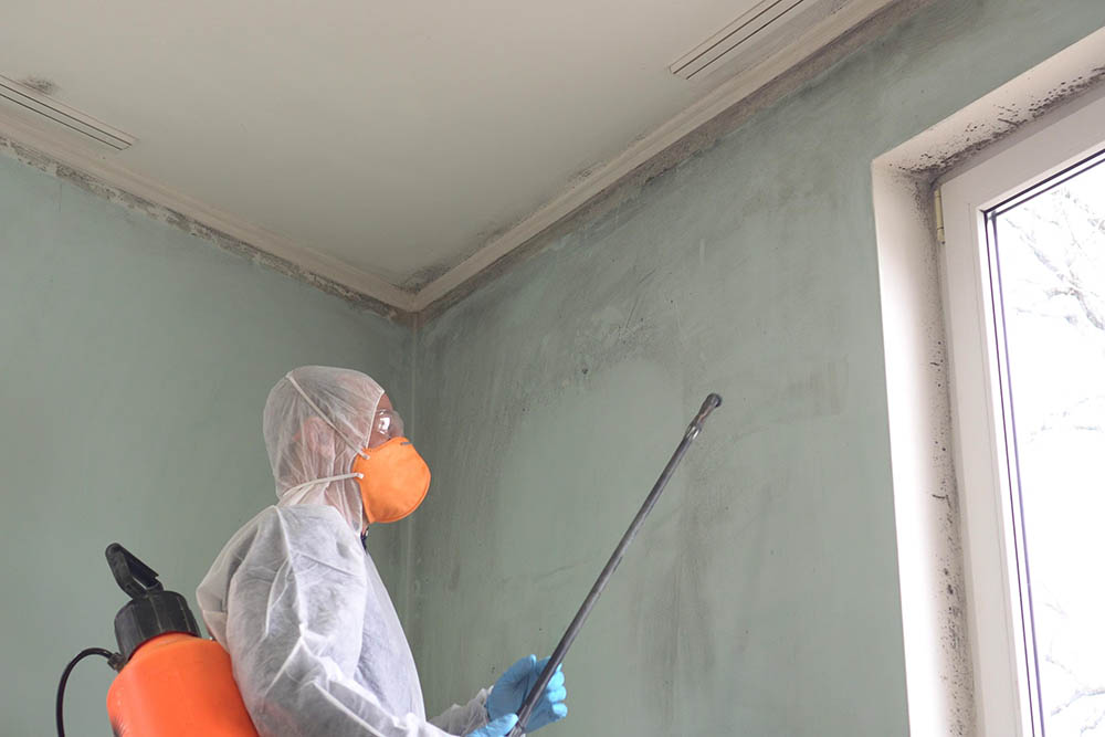 Is mold remediation business profitable