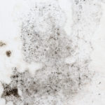 Will a Bank Finance a House with Mold?